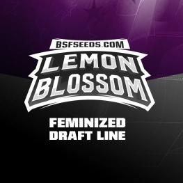 Lemon Blossom Auto (x2)