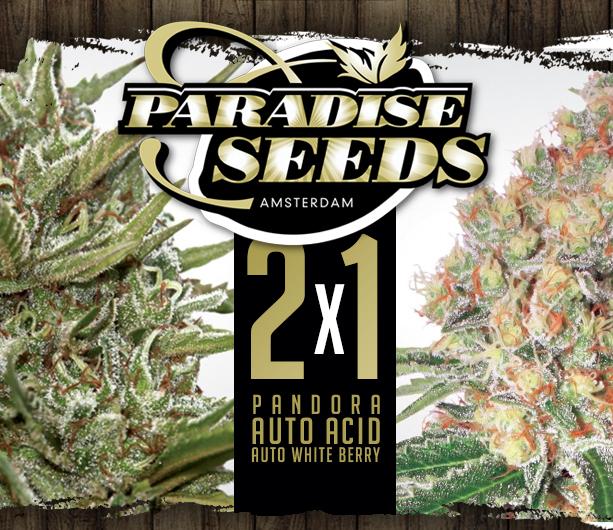 Paradise 2x1