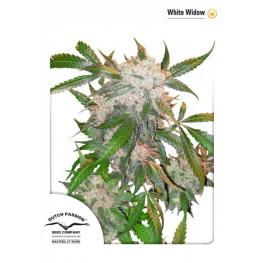 White Widow (x3) +1